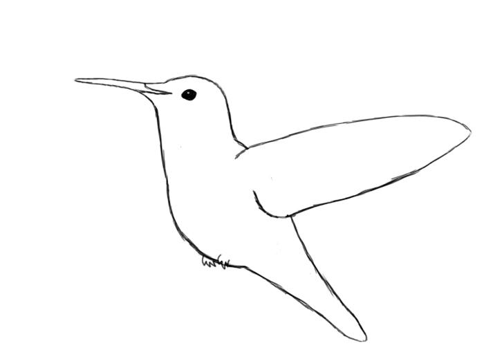 700x503 Simple Hummingbird Line Drawing Draw Your Hummingbird's Eye