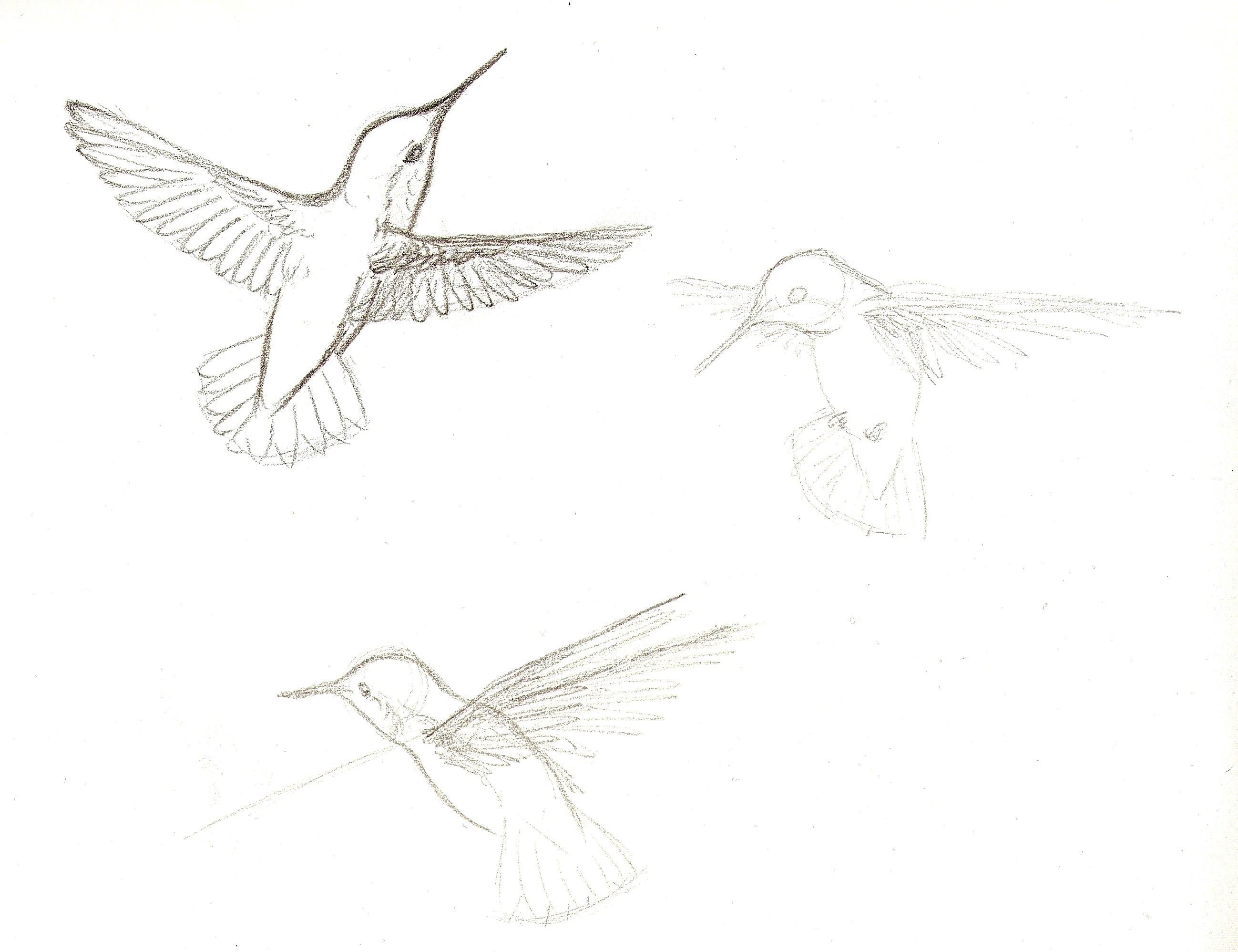 2597x1996 Flight Sketches