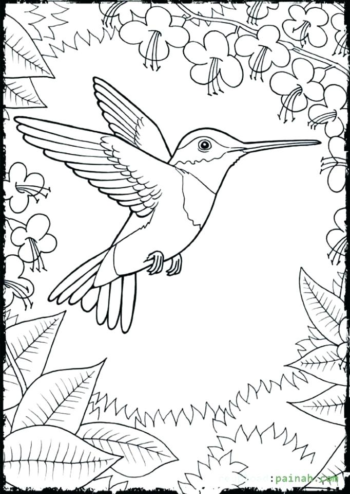 682x960 Coloring Pages Of Hummingbirds Coloring Page Hummingbird Among