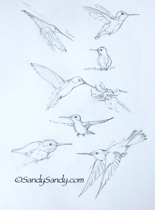 515x700 Drawing Everyday Pretty Woman And Seven Happy Hummingbirds