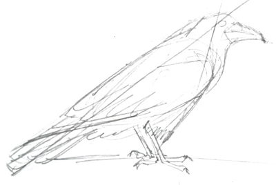 400x268 How To Draw A Raven Step By Step