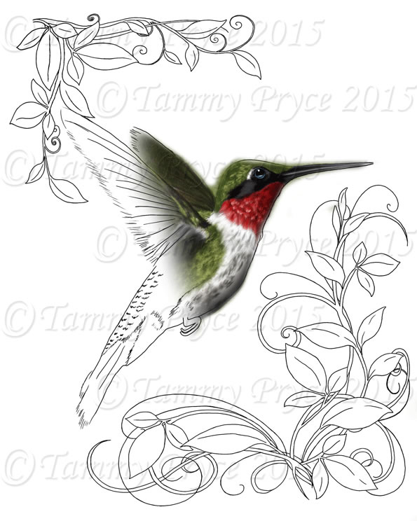 595x744 Humming Bird Adult Coloring Page Digi Stamp Instant Download