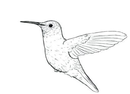 417x300 Hummingbird Coloring Page Humming Birds Coloring For Kids Swallow