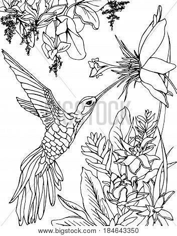 353x470 Hummingbird Images, Illustrations, Vectors