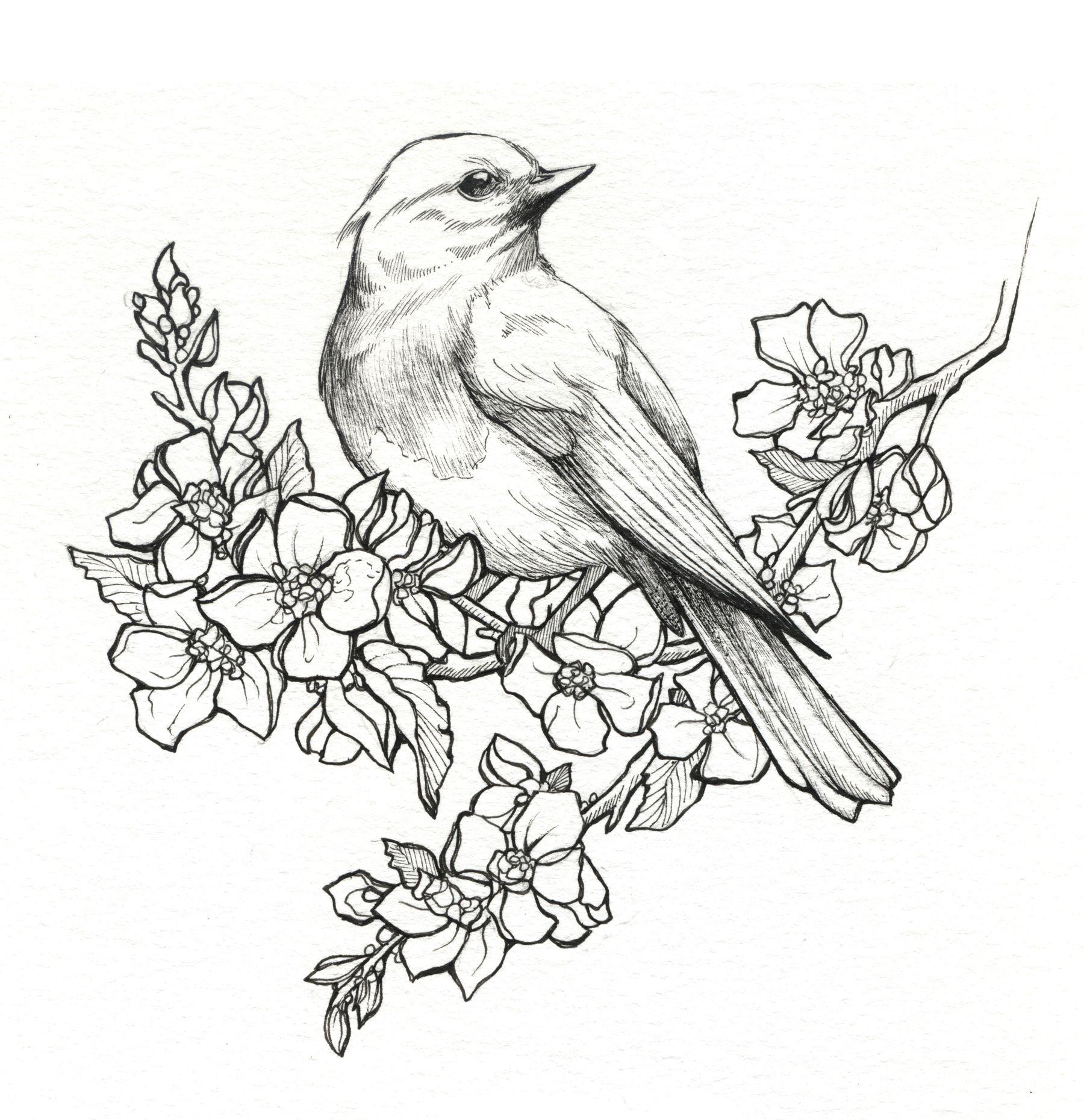 1800x1860 Pencil Drawing Birds And Flower Drawn Hummingbird Rose