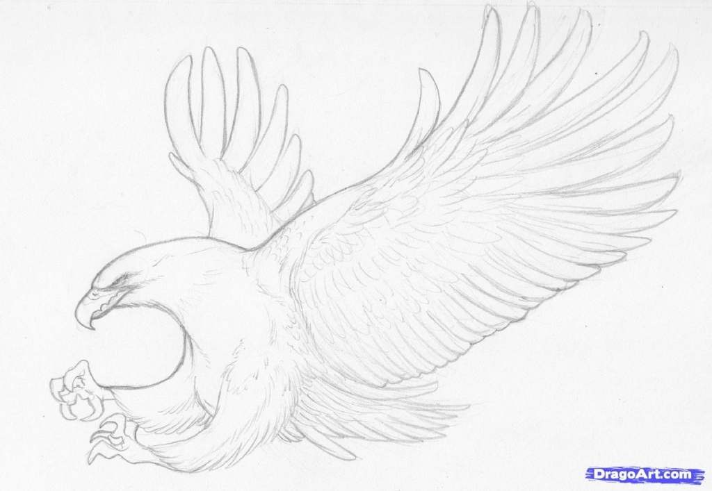 1024x707 Pencil Drawing Of Bird How To Sketch Eagle In Pencil Draw
