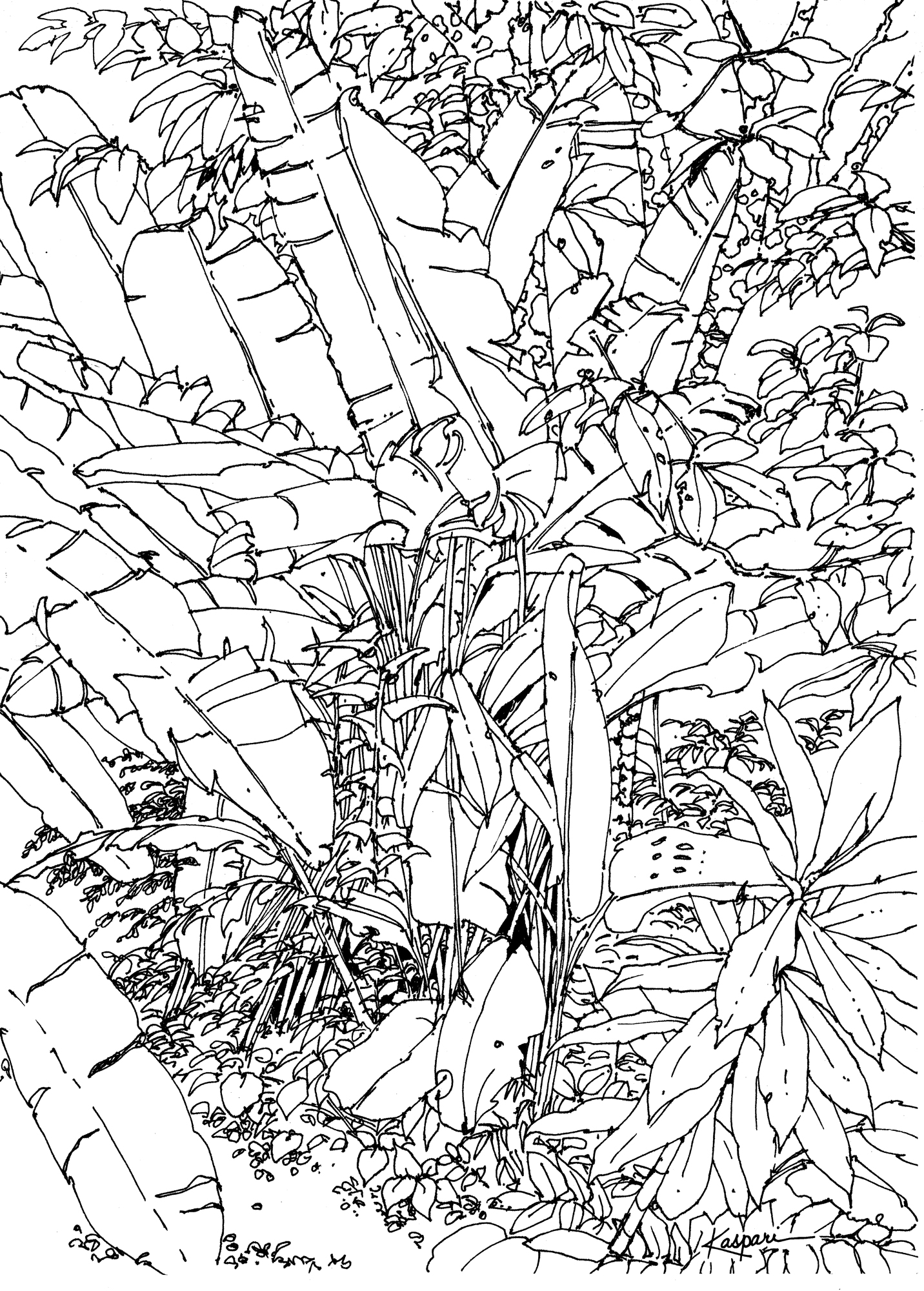 1432x2000 Plein Air Pen And Ink Drawings Drawing The Motmot