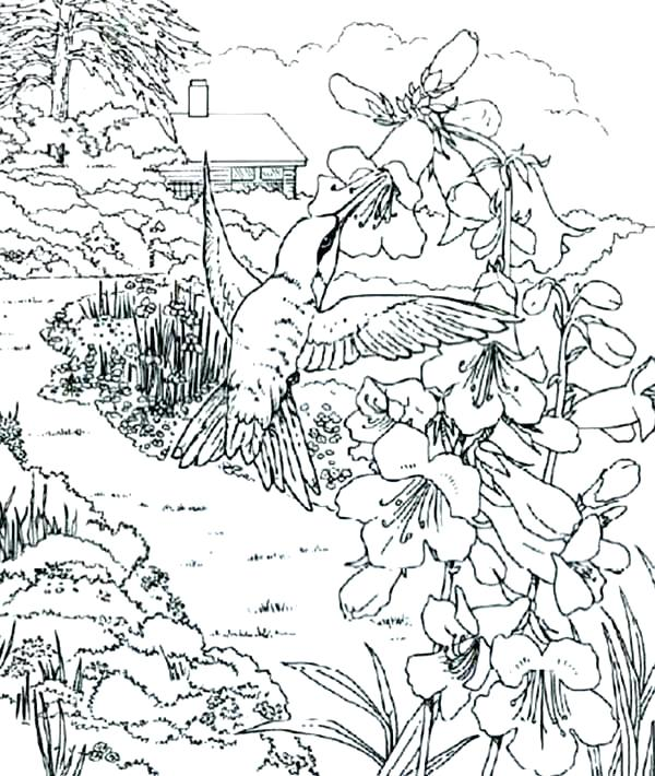 600x710 Simple Hummingbird Coloring Page Fee Pages Download And Relax