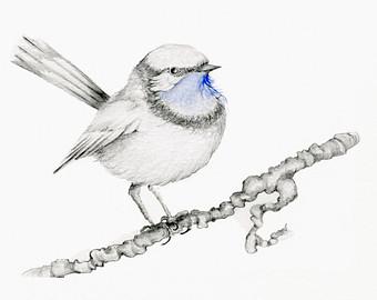 340x270 Bird Drawing Giclee Fine Art Print Of My Original Pencil