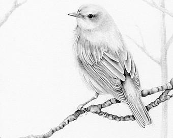 340x270 Bird Drawing Etsy