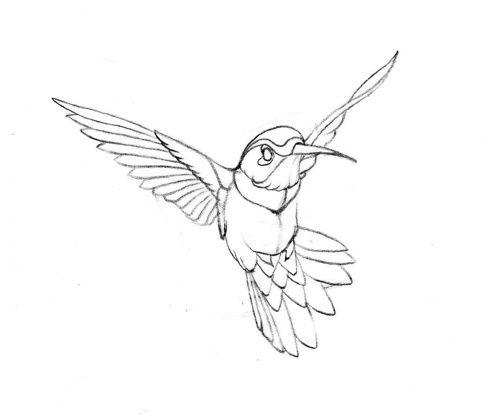 485x420 Drawn Brds Hummingbird