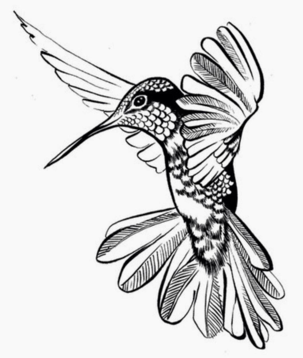 1058x1250 Hummingbird Tattoo Sketch