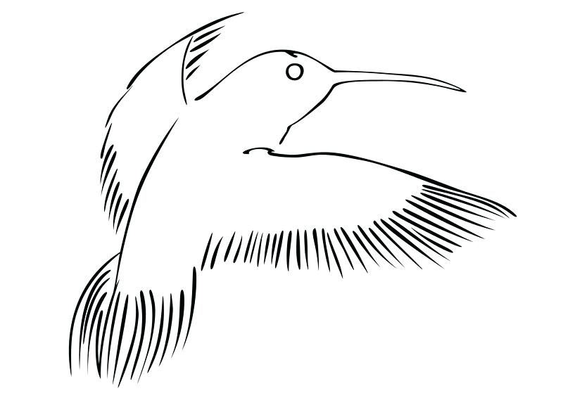 800x566 Hummingbird Outline