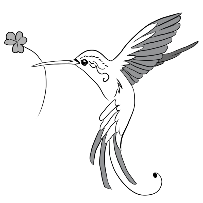 800x800 Collection Of Superb Hummingbird Tattoo Design
