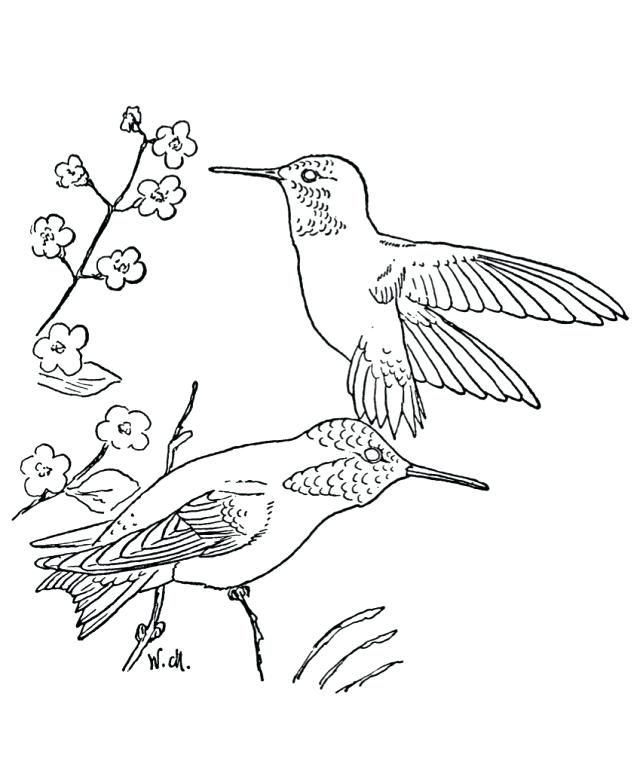 640x761 Hummingbird Animal Coloring Pages Coloring For Adults Hummingbirds