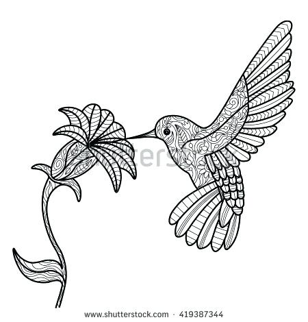 Hummingbirds And Flowers Drawing at GetDrawings.com   Free for ...