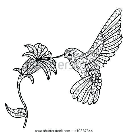 450x470 Hummingbird Coloring Simple Hummingbird Coloring Pages Hummingbird