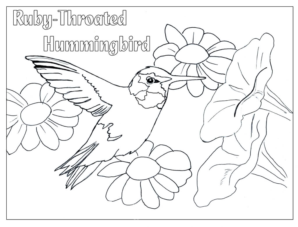1024x780 Beautiful Realistic Flower Coloring Pages Hummingbirds Page