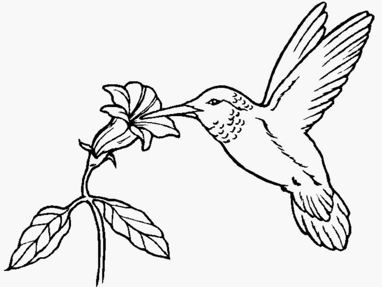 Hummingbirds And Flowers Drawing at GetDrawings.com | Free ...