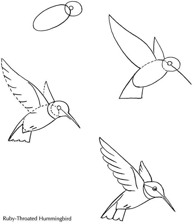 650x750 How To Draw Hummingbirds Step 2. How To Draw A Bird Humming Bird