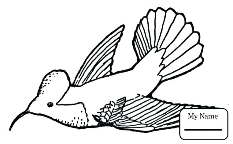 762x470 Coloring Pages Of Hummingbirds Coloring Pages For Kids Bee