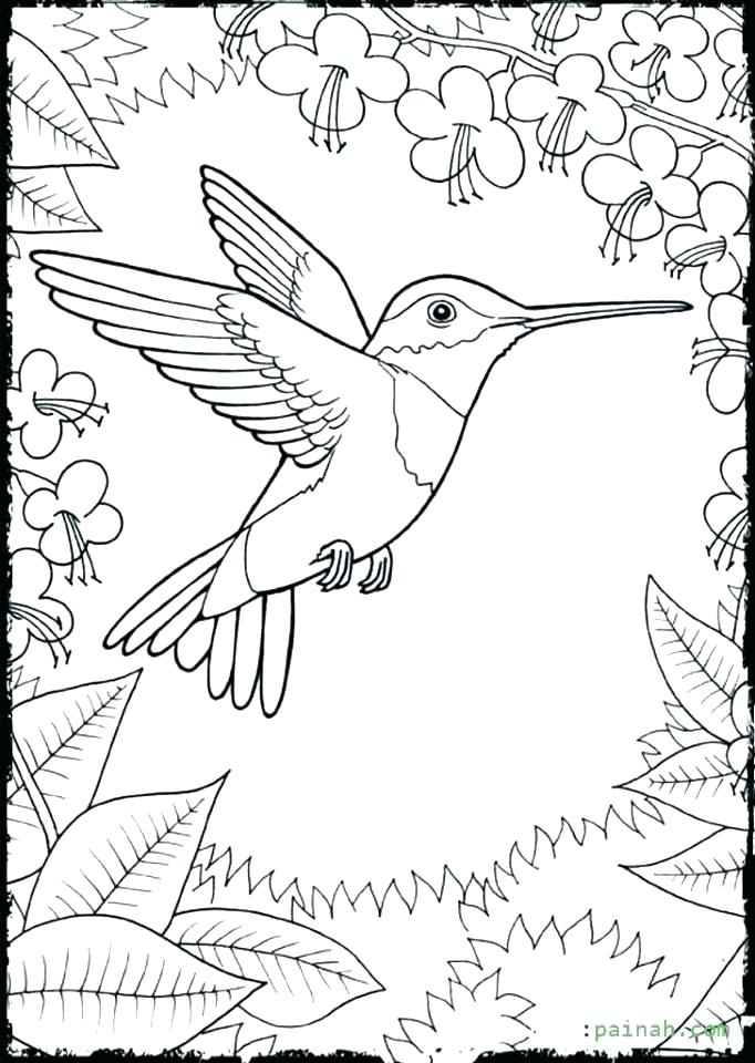 682x960 Coloring Pages Of Hummingbirds Coloring Pages Of Hummingbirds
