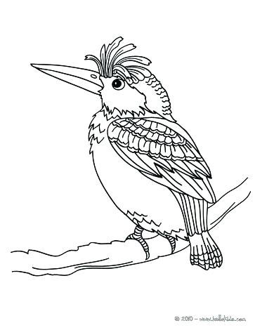 363x470 Coloring Pages Of Hummingbirds Colouring Pages Hummingbird