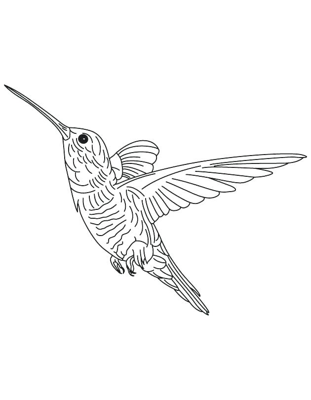 630x810 Coloring Pages Of Hummingbirds Drawn Hummingbird Black And White