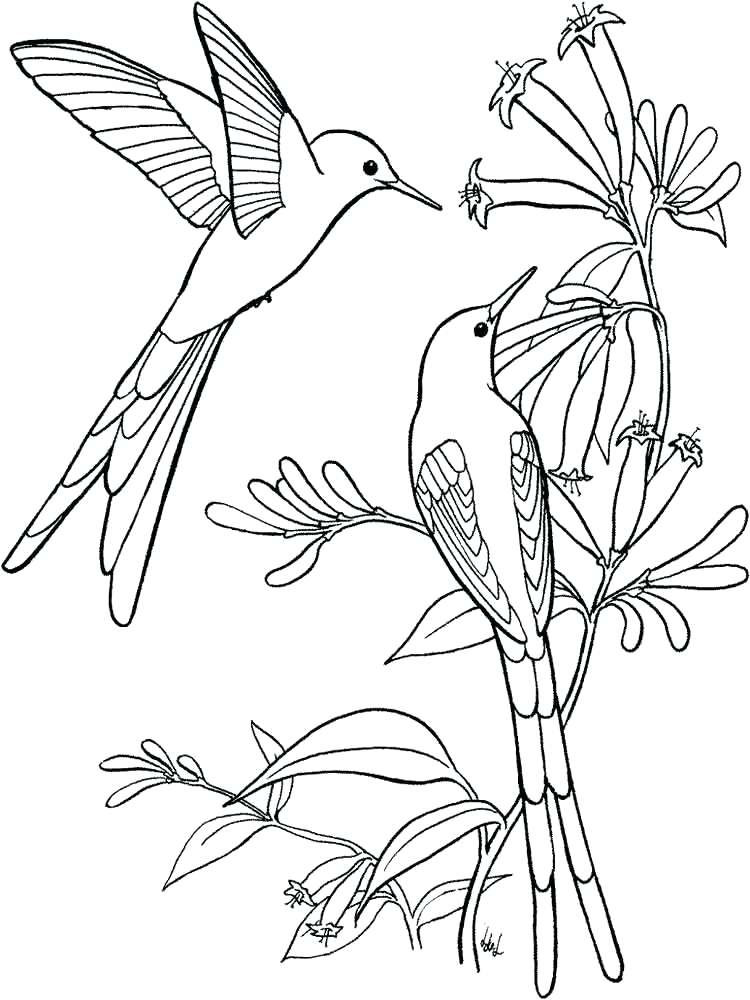 750x1000 Coloring Pages Of Hummingbirds Hummingbird Coloring Pages