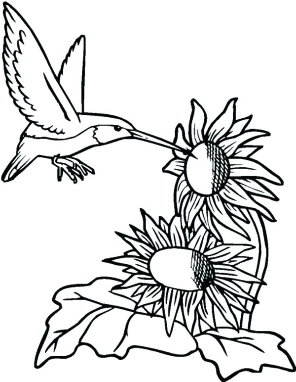 600x772 Elegant Sunflowers Coloring Pages Crayola Photo Of Hummingbirds
