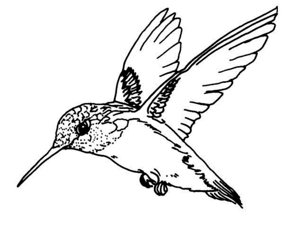 960x768 Hummingbird Coloring Pages