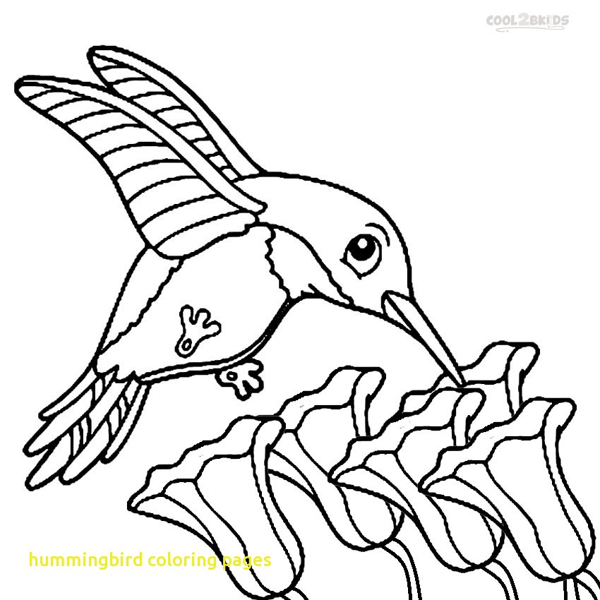 850x850 Hummingbird Coloring Pages With Hummingbirds Coloring Pages