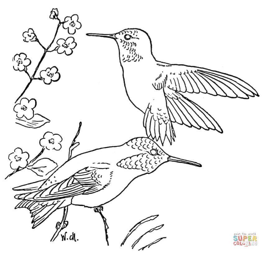 849x814 Hummingbird Coloring Pictures
