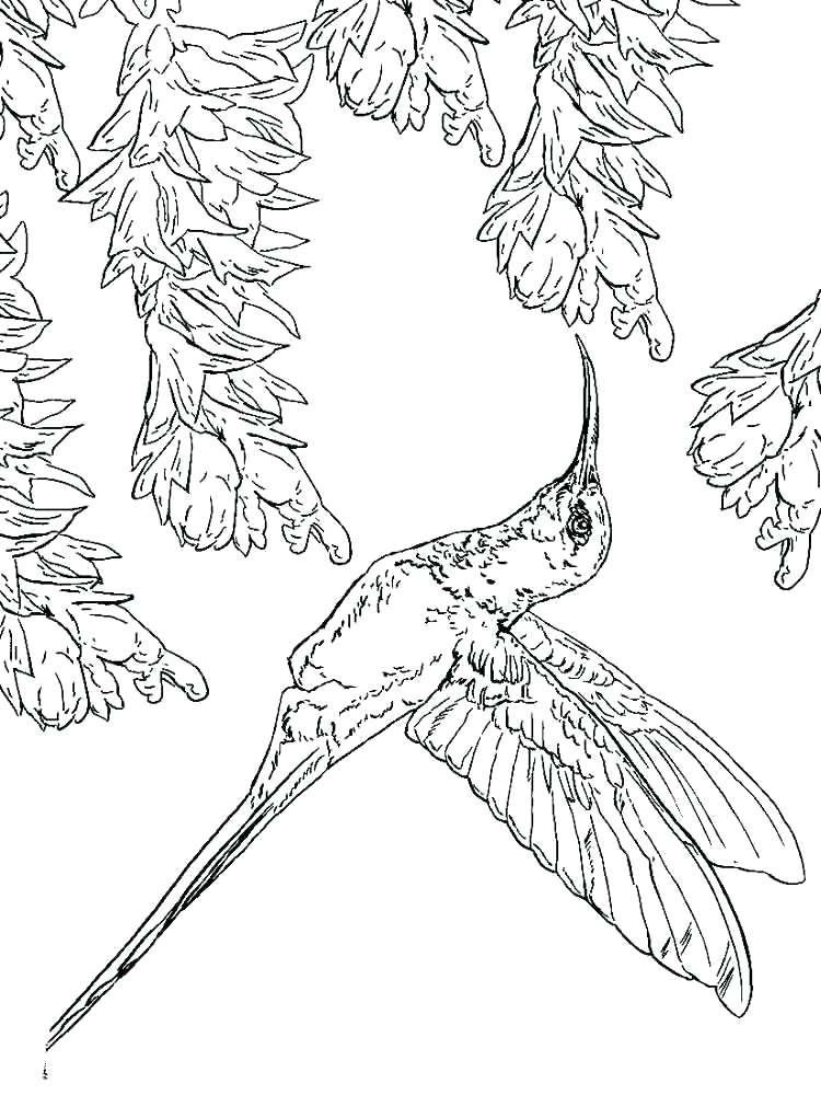750x1000 Minimalist Hummingbird Coloring Pages Print Free To Images Of H