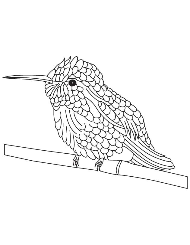 630x810 Bee Hummingbird Coloring Pages On Branch