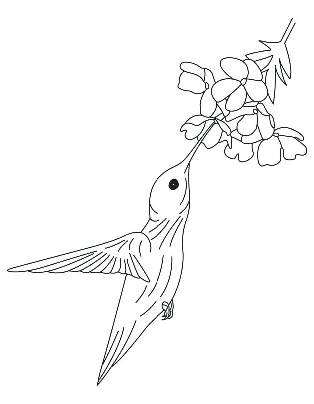 630x810 Hummingbird Coloring Pictures Davidparker.co