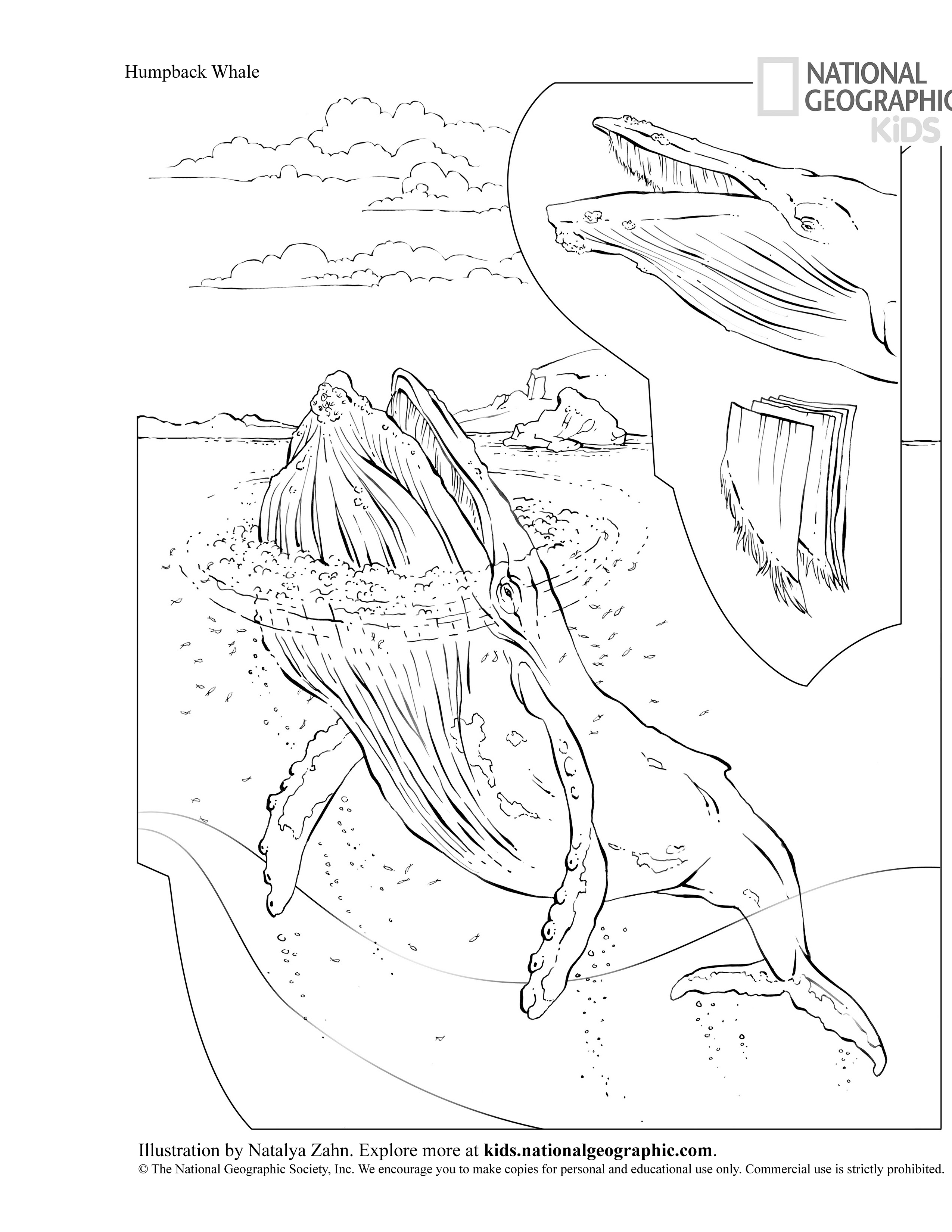 Humpback Whale Drawing at GetDrawings.com | Free for personal use ...