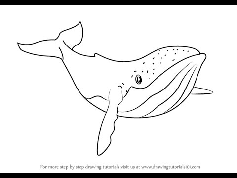 480x360 How To Draw Humpback Whale From Fantasia