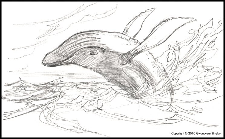 744x460 Humpback Whale Breaching Drawing