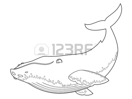 450x337 Illustration Of A Humpback Whale On White Background With Black