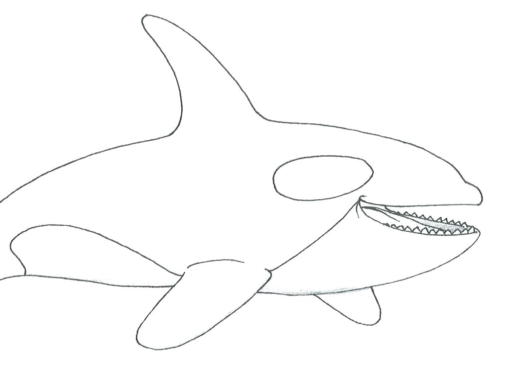 1024x752 Whales Coloring Pages Whale 2 Whale Shark Coloring Pages