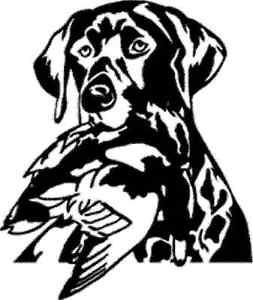 253x300 Detailed Lab Head Wmallard! Dog Lab Decal Sticker Hunting