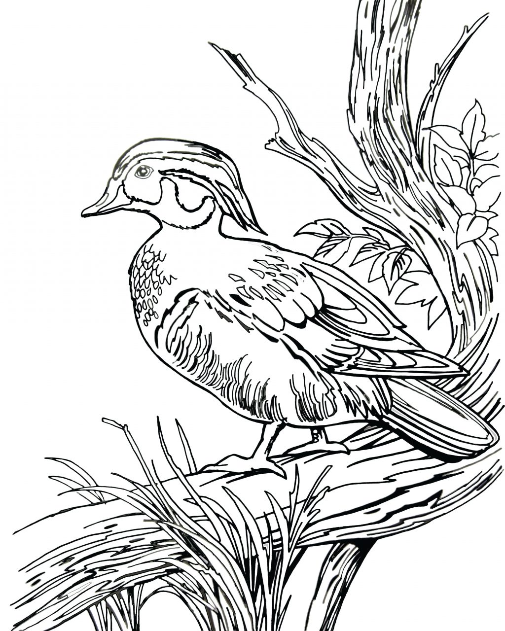 1024x1280 Coloring Pages ~ Hunting Coloring Pages Stunning Duck With And Dog
