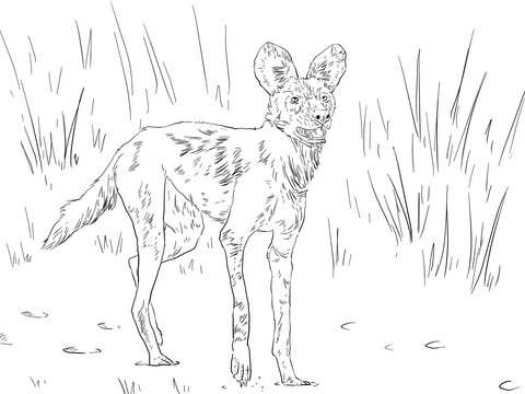 480x360 African Wild Dog Or Ornate Wolf Coloring Page Free Printable