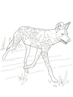 236x315 African Wild Dog Or Painted Hunting Dog Animal Colouring Pages