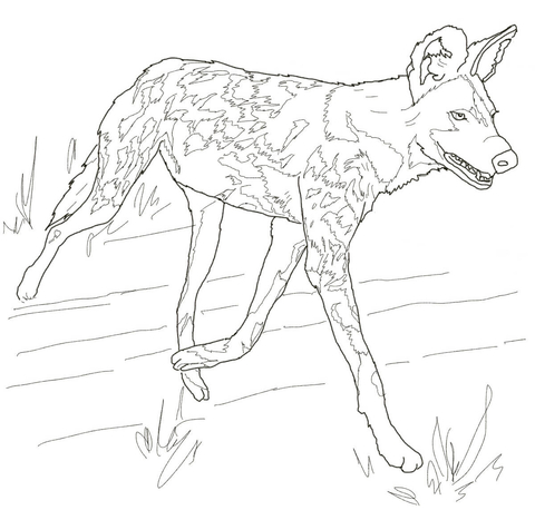 480x458 African Wild Dog Or Painted Hunting Dog Coloring Page Free