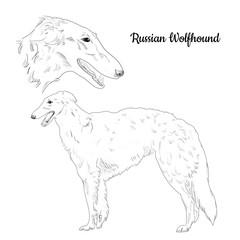 240x240 Search Photos Sighthound