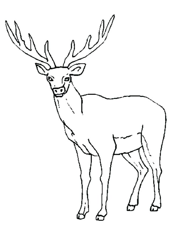 600x831 Elk Coloring Page Sheet Hunting Pages On Elk Coloring Page Drawing