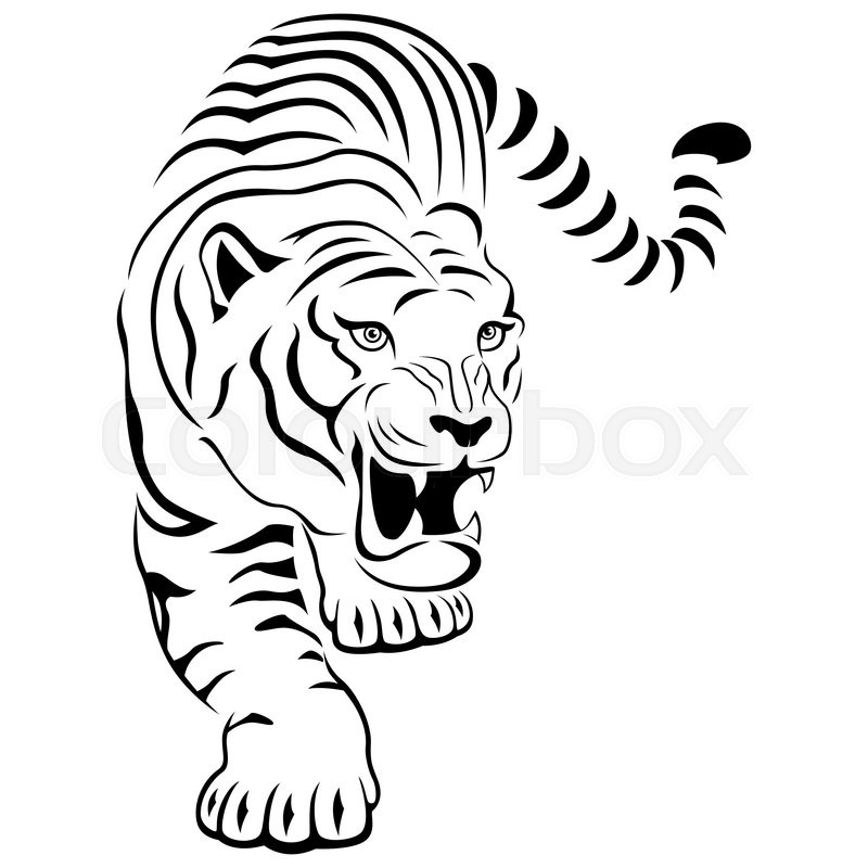 800x800 Aggressive Concealed Large Tiger On The Hunting, Hand Drawing