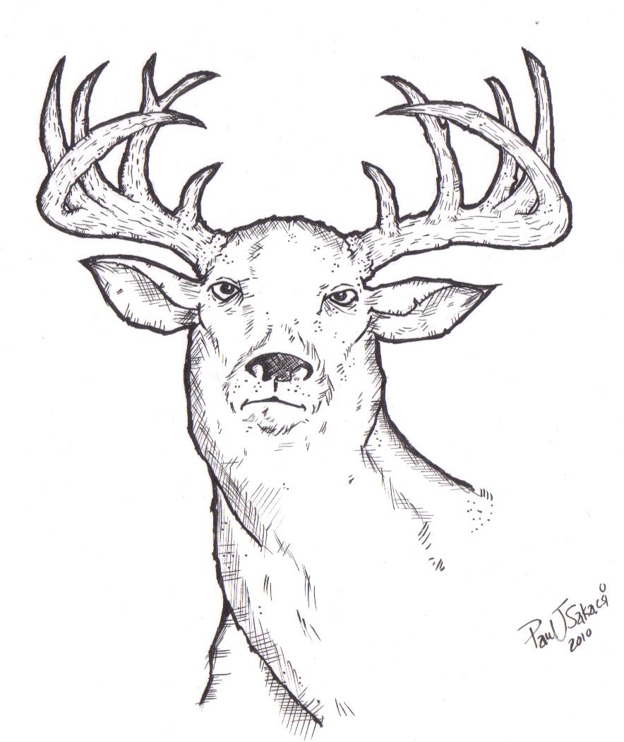 884x1050 Oh Deer! My World Inside Me